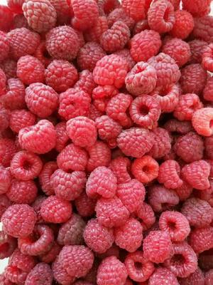 吉林白山浑江区秋英树莓 冻果