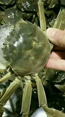 湖南岳阳云溪区鄱阳湖大闸蟹 2.0-2.5两 母蟹