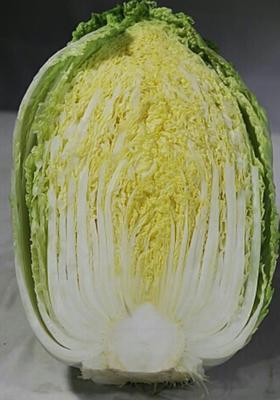 陕西省西安市阎良区韩国黄心白菜 3~6斤 毛菜
