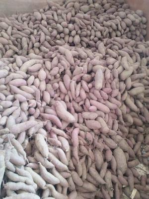 山东威海环翠区富硒紫薯 3~4两