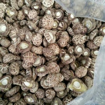 湖北省随州市曾都区花菇 3.0 - 3.5cm 特级