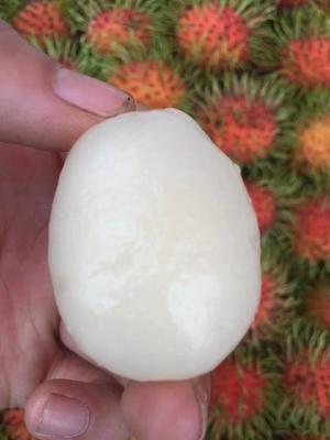广东广州白云区泰国红毛丹 1.5-2cm
