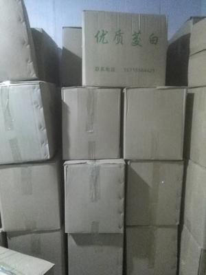 安徽安庆双季茭白 20-25cm