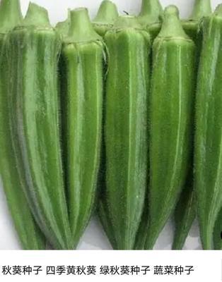 广东广州黄秋葵 6 - 8cm
