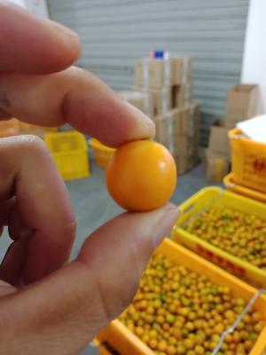 广西柳州珍珠果 2-3cm 1两以下