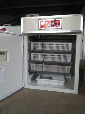山东省德州市德城区养殖孵化机