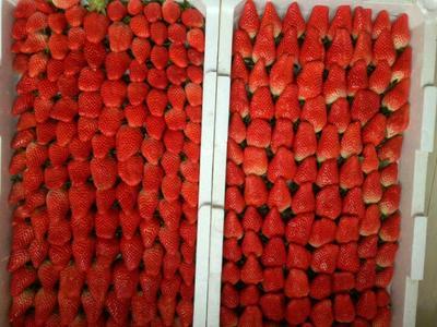 山东烟台甜宝草莓 30克以上