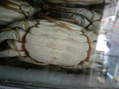 湖南岳阳岳阳楼区洪湖螃蟹 2.0-2.5两 母蟹