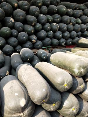 河南省周口市郸城县吊冬瓜 15斤以上 黑皮