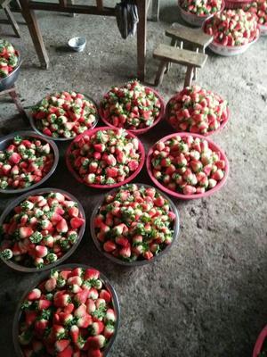 江苏连云港奶油草莓 30克以上