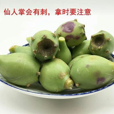 海南省东方市东方市海南食用仙人掌 5~10公分