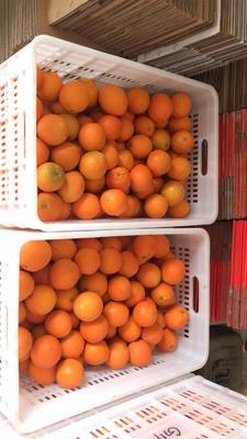 这是一张关于脐橙 70-75mm 4-8两 赣南脐橙 双11秒杀价的产品图片