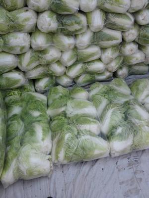 陕西省渭南市蒲城县秦白系列 6~10斤 净菜