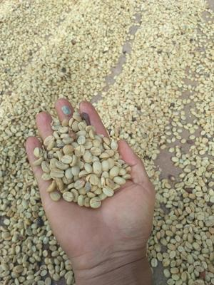 云南思茅思茅区普洱小粒咖啡豆
