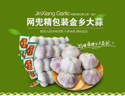 山东济宁金乡大蒜 5~5.5cm 多瓣蒜