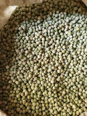 四川省阿坝藏族羌族自治州小金县青干豌豆