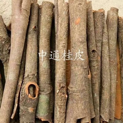 广西贵港桂平市中通桂皮