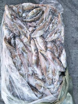 吉林延边朝鲜冻品海鱼