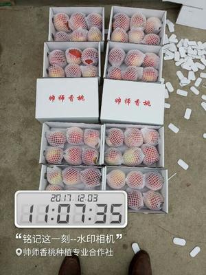 河南洛阳宜阳县帅师香冬桃 70mm以上 4两以上