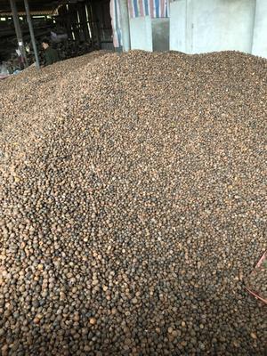 广西柳州野生山茶油