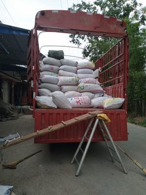 这是一张关于杂交稻 中稻的产品图片