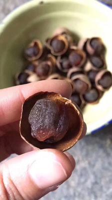 广东茂名高州市带壳桂圆 散装 三等 带壳