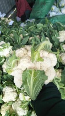 这是一张关于白菜花 1~2斤 净菜的产品图片