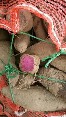 湖南益阳南县济紫薯1号 5~6两