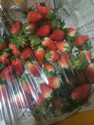 山东临沂拉松6号草莓 30克以上