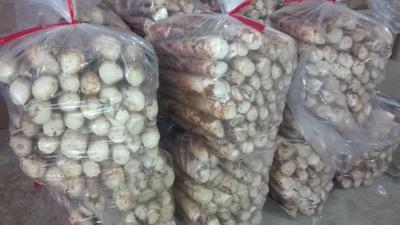 这是一张关于雷竹笋 30cm以上 鲜笋的产品图片