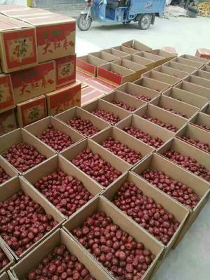 这是一张关于陕北大枣 一级的产品图片