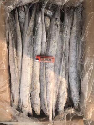 这是一张关于舟山带鱼 野生 0.5龙8国际官网官方网站以下的产品图片