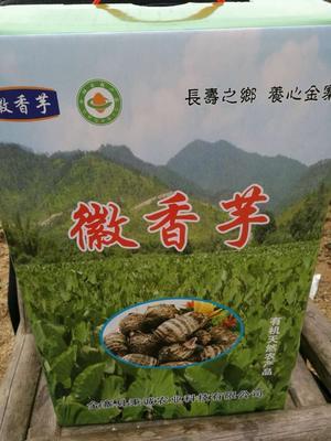 安徽六安香芋 4cm以上