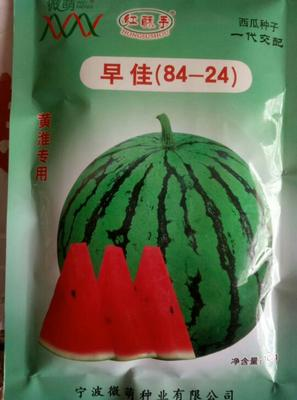 河南商丘8424西瓜 无籽 1茬 7成熟 5斤打底