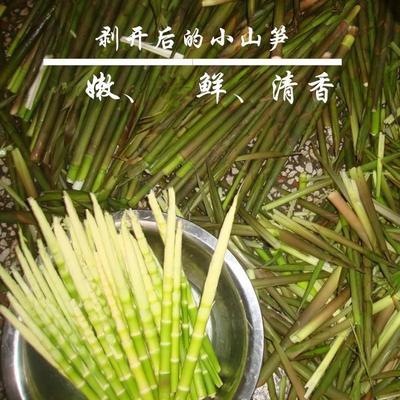 这是一张关于野生山竹笋的产品图片