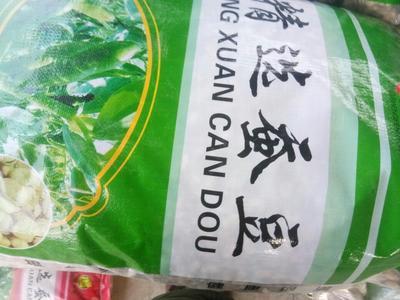 甘肃定西安定区新鲜蚕豆
