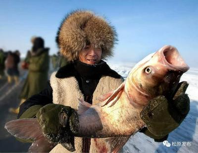 吉林松原花鲢 野生 10-18公斤