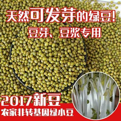 内蒙古赤峰红山区小明绿豆 袋装 1等品