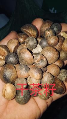 广西桂林油茶籽