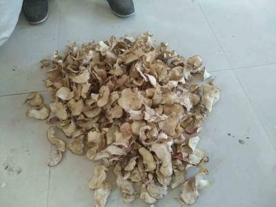 河北省保定市定州市萝卜片 5~8cm
