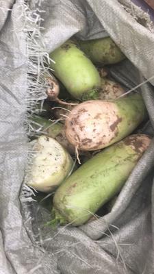 这是一张关于青皮绿萝卜 0.2~1斤的产品图片