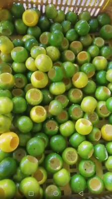 这是一张关于河源市小青柑普洱茶 罐装 特级的产品图片
