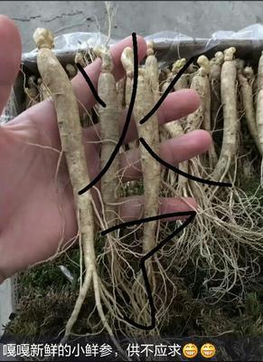 这是一张关于野生人参 鲜参的产品图片