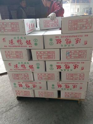安徽省淮北市相山区白条鸭 冷冻