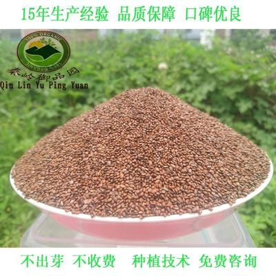 陕西省西安市周至县猕猴桃种子