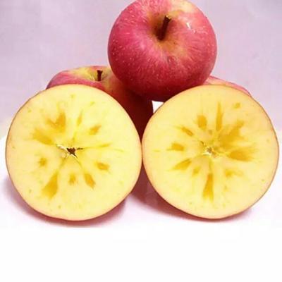 新疆阿克苏阿克苏冰糖心苹果 纸袋 片红 70mm以上