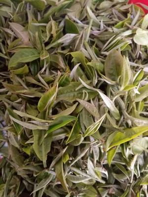 云南红河绿春一叶茶 盒装 一级