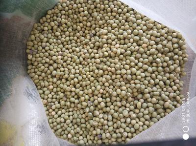 江苏省南通市海门市黄豆种子