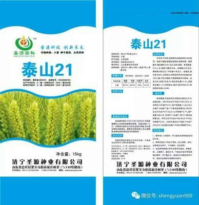 山东济宁鱼台县小麦种子