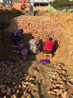 湖北襄樊宜城市龙九红薯 3两以上